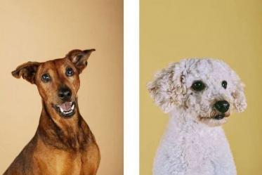 Unikátne portréty zvierat